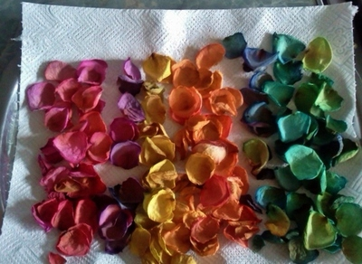 Drying flower petals on a tray with paper towels