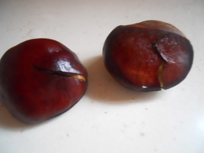 conkers, horse chestnuts