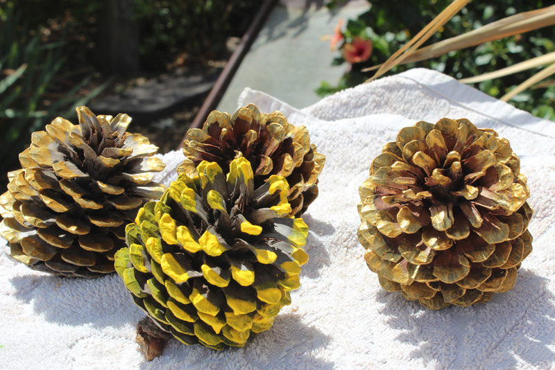 pine cones, name place, dinner party, wedding, diy, pine cone craft